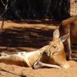 Australija - išskirtinės gamtos žemynas