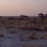 Namibija - didžiųjų žvėrių valstybė