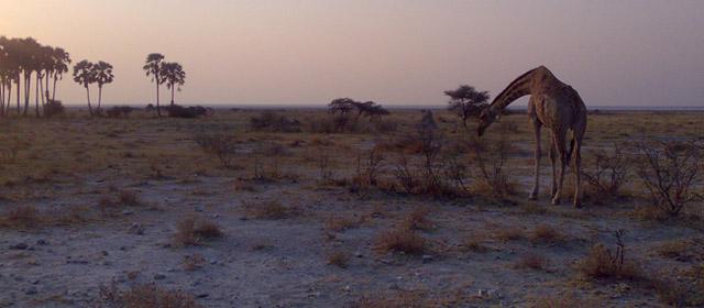 Namibija – didžiųjų žvėrių valstybė
