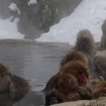 Gyvūnija – Įspūdingiausios pasaulio vietos