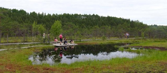 Estija – laukinė gamta ir modernūs miestai