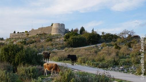 Sarandos pilis, karvės, ir bunkeris (dešinėje)