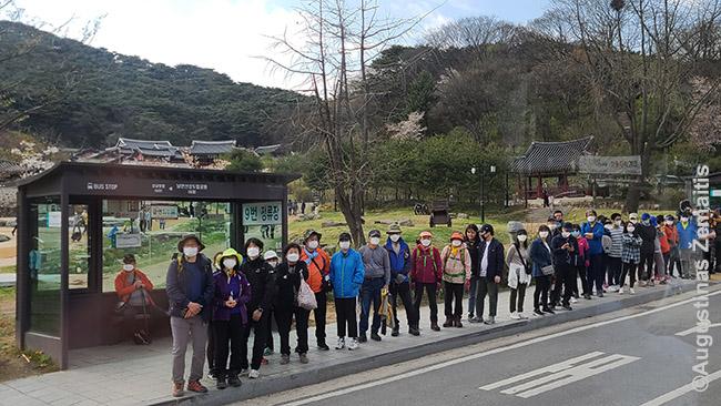 Eilė korėjiečių laukia autobuso atgal iš Namhansanseong tvirtovės Seulo priemiesčiuose kur labai populiaru pasivaikščioti