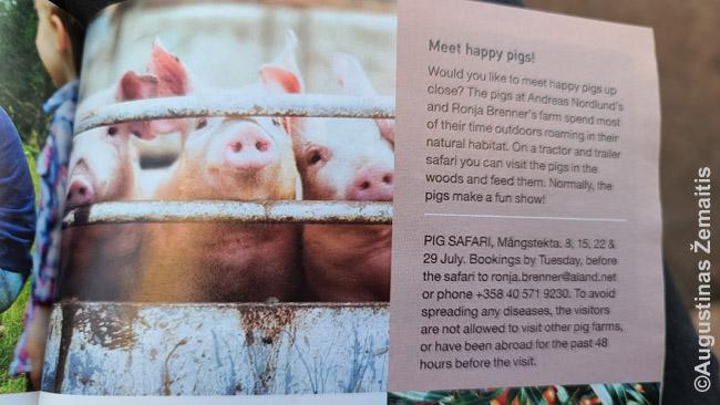 Kiaulių safaris - viena daugybės atokių pramogų, reklamuojama kelionių į Alandų salas leidinyje, kuris dalinamas vietos parduotuvėse