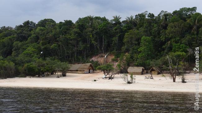 Amazonės krantai
