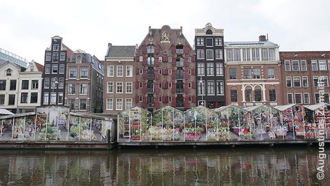 Amsterdamo kanalas. Gėlės - dar vienas miesto simbolių