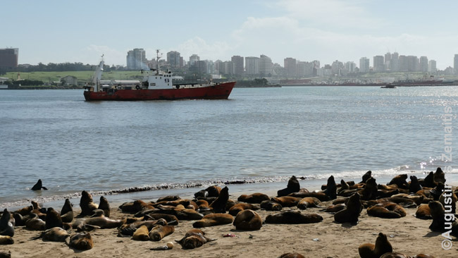 Argentinos kurortuose svarbios aplinkinės gyvūnų kolonijos. Šie jūrų liūtai gyvena Mar Del Platoje, gausu ir pingvinų, papūgų kolonijų, dešimtmečius gyvenančių ten pat