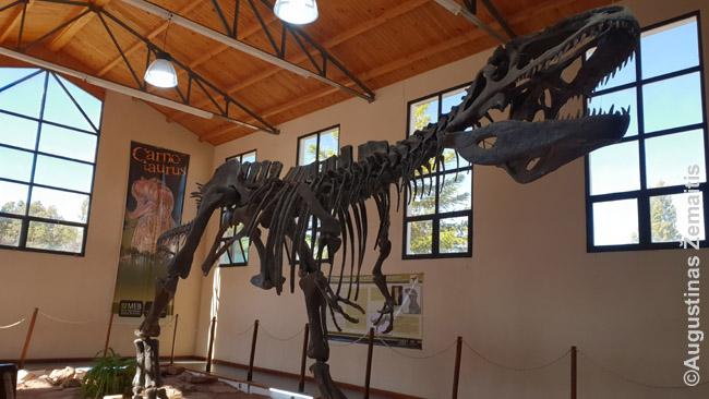 Atkurtas dinozauro skeletas viename Patagonijos muziejų