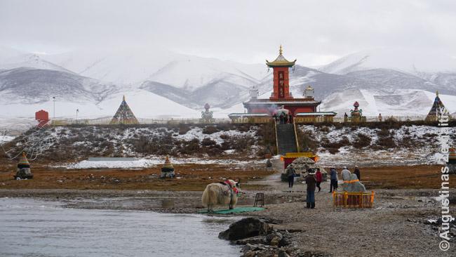 Tibetiočių šventykla ir jakas prie Činghajaus, didžiausio Kinijos ežero