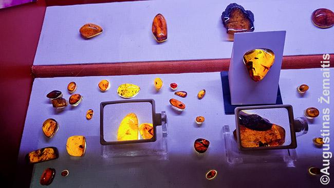 Gintaro muziejuje. Kadangi apie indėnų ryšius su gintaru žinoma mažai, muziejuje pasakojama apie kitas tautas - tarp jų paskojama ir lietuivška Jūratės ir Kastyčio legenda, apie Juodkrantės lobį
