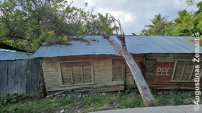 Medžio suknežinta bakūžė artėjant prie Haičio sienos