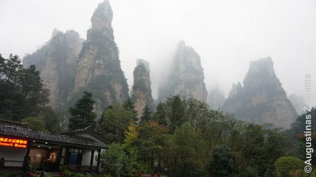 Džangdžadzie į dangų šaunančių uolų miškas - viena garsiausių gamtinių lankytinų vietų Kinijoje