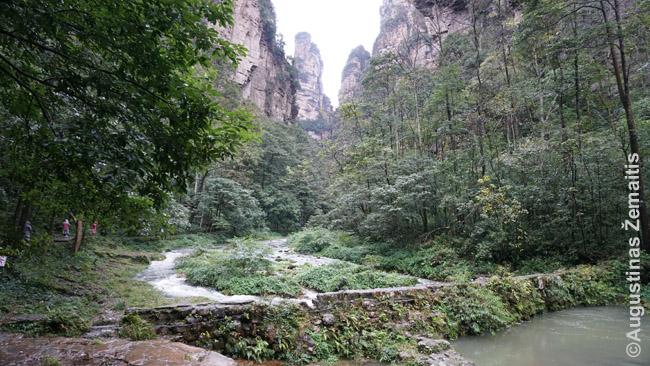 Žygio takas palei Dzinbiano upelį, kurio pažiba - 300 m viršijanti uola-bokštas