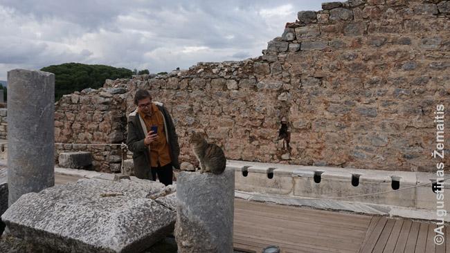 Efese labai daug katinų - kai kuriems turistams jie atrodo įdomesni, nei pats miestas....