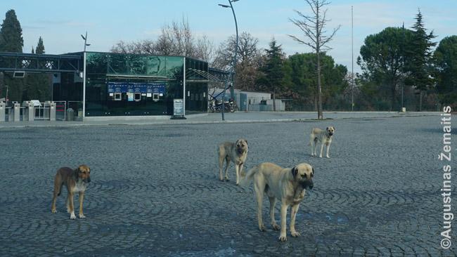 Benamiai šunys pasitinka mus, atvykusius į Troją. Daugelis jų - neagresyvūs, bet kai jų tiek daug ir tokie dideli, nebuvo jauku