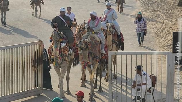 Vakare Gizos kupranugarininkai išjoja iš piramidžių zonos