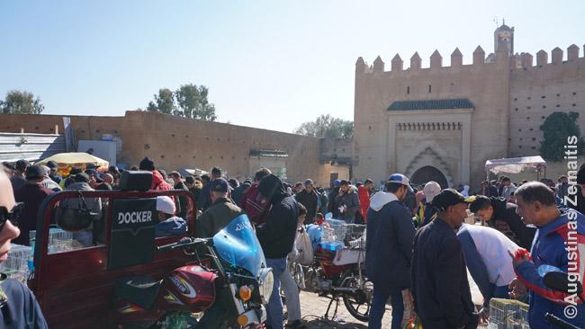 Paukščių turgus anapus Bab Guissa vartų - pardavinėjami ir 'eiliniai balandžiai', ir paukšteliai-giesmininkai