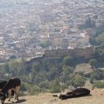 Fesas – ant asilo į Viduramžius