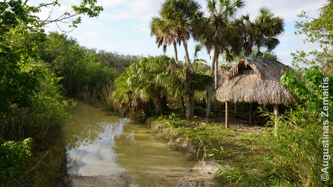 O kažkada indėnai gyveno taip. Vaizdas nuo bagio kelio pro Everglades. Pastatėlis atkurtas, neautentiškas