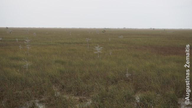 Everglades pelkynai nuo Pa-Hay-Okee apžvalgos bokšto