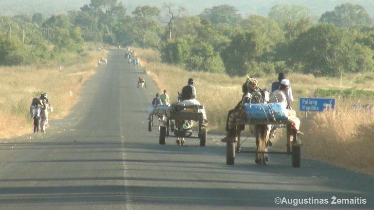 Gambijoje iš turgaus prekeiviai tebegrįžta vien arkliais ir vežimais, kaip pas mus 100 metų atgal