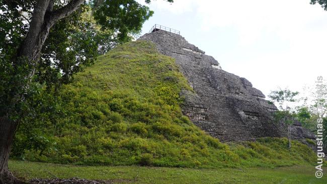 Pusiau apaugusi majų piramidė. Tikalis.
