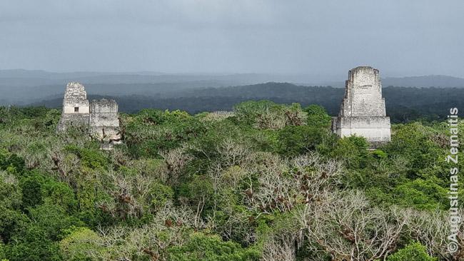 Virš džiunglių iškilusios Tikalio piramidžių viršūnės - šventyklos