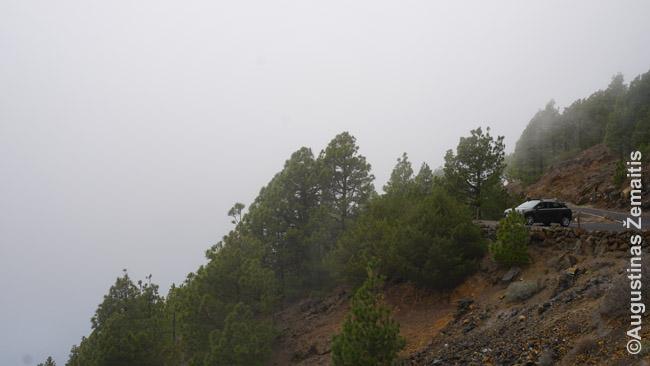 Mišku apaugusios ir debesyse paskendusios aukštumos pietinėje pakrantėje