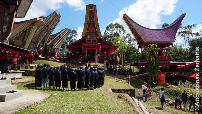 Toradžų laidotuvės tradiciniame kaime. Kairėje - šokis, dešinėje - turistai stebi ką tik paaukotą buivolą