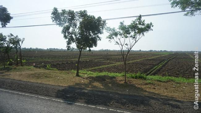 Vienas ilgų kelionių pliusas - pamatai eilinio Javos gyvenimo. Ryžių laukus, tolimus vulkanus, vos 'gėdą' prisidengusius kažin kokių tolimų Indonezijos tautybių žmones