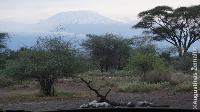 Kilimandžaro kalnas žvelgiant nuo laužavietės prie mūsų Kimana stovyklos
