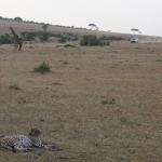 Kenijos safarių parkai - pirmykštis gyvūnų pasaulis