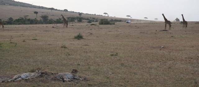 Kenijos safarių parkai – pirmykštis gyvūnų pasaulis