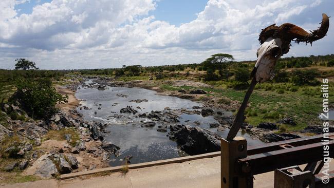 Kaukolė prie tilto tarp dviejų Masai Maros rezervato dalių