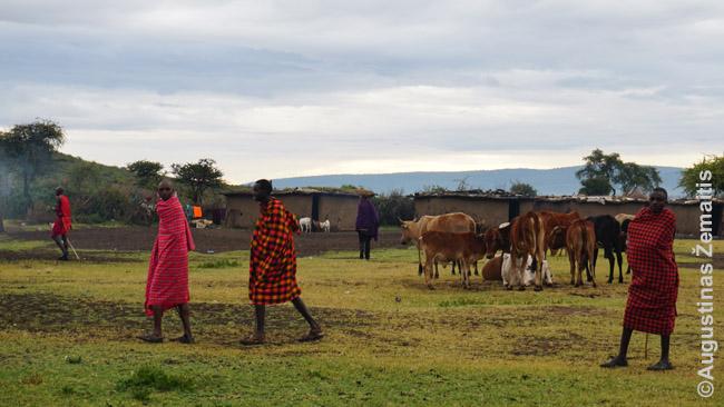 Masajų kaimas Kenijoje