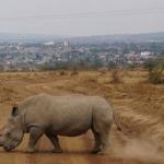 Kenija - Afrikos kaleidoskopas