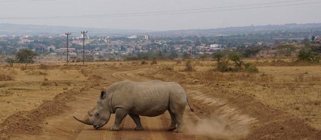Kenija – Afrikos kaleidoskopas