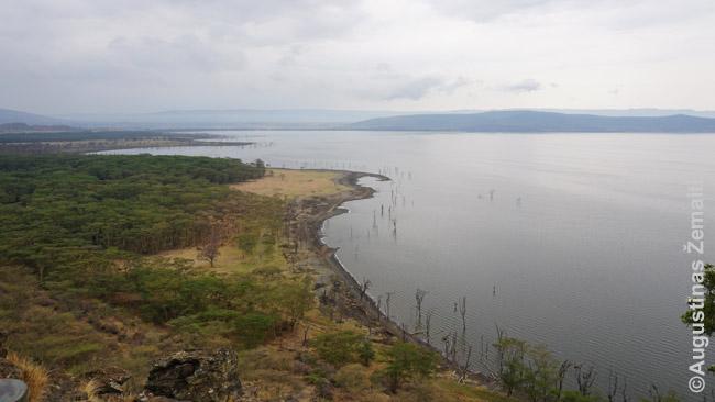 Nakuru ežero vaizdas nuo apžvalgos aikštelės. Tai - viena retų vietų safarių parkuose, kur leidžiama išlipti