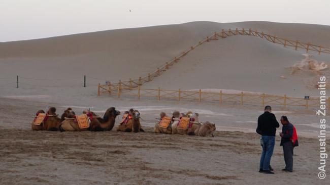 Apgavikai Dunhuange. Dešinėje - kupranugario vadeliotojas, kairėje - neva priėjęs paaiškinti 'turistas'