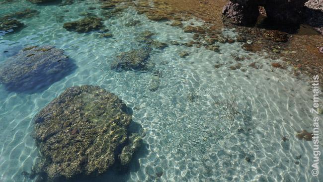 Koralinis dugnas palei kiekvieną iš salų