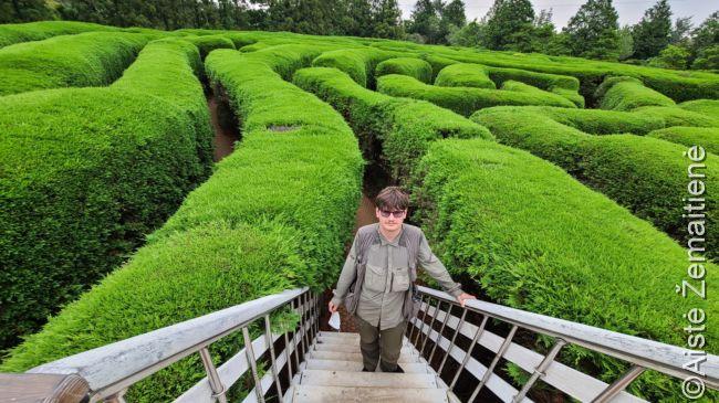 Čedžu labirinte