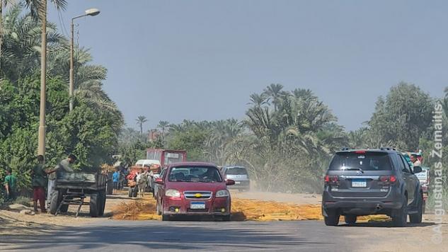 Ūkininkai deda ant kelio derlių, kad jį iškultų pravažiuojantys automobiliai savo ratais ir svoriu?