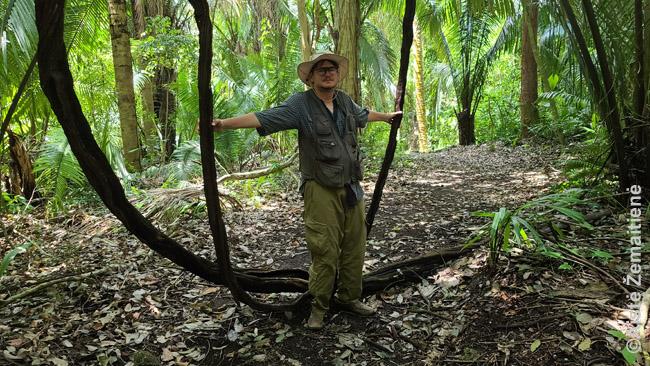 Žygis per džiungles prie majų griuvėsių be kitų žmonių