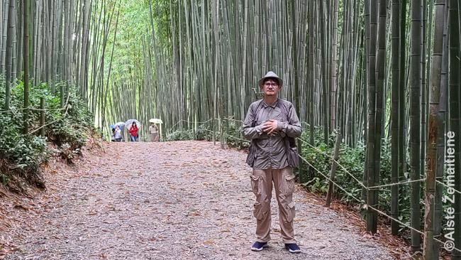 Damjango bambukų miške