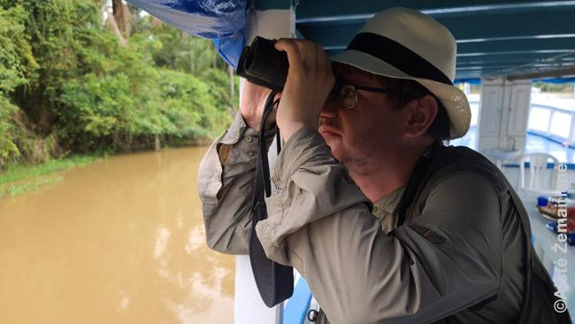 Stebiu tinginius medžiuose iš laivo