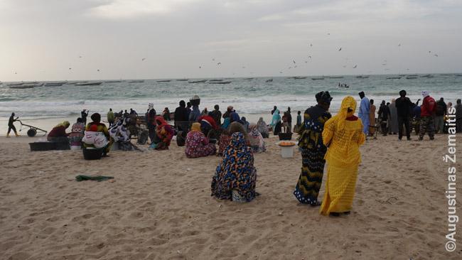 Moterys Nuakšuto žvejybiniame uoste laukia žuvis parplukdysiančių vyrų. Jos užsiima žuvų perpardavimu, turi restoranus