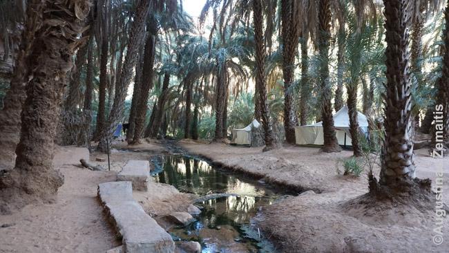 Visai tanki palmių giraitė Terdžito oazės gilumoje. Menkas upeliūkštis randasi iš pro uolas prasiskverbusio vandens, iš jo pripildomi net baseinėliai
