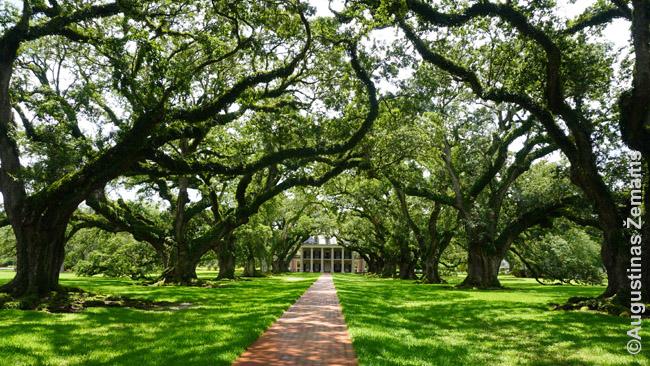 Oak Valley dvaro ąžuolų alėja (ir dvaras tolumoje) prie Naujojo Orleano