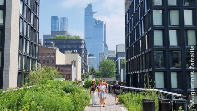 Niujorko High Lane (su Hudson Yards dangoraižiais fone)