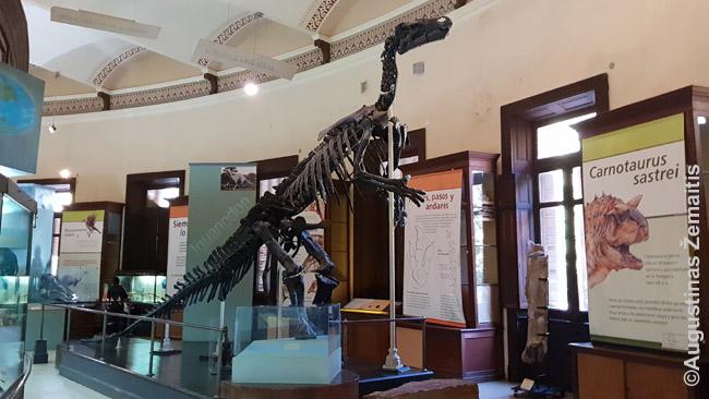 Dinozauro skeletas La Platos muziejuje